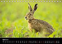 Der Zauber der Natur (Tischkalender 2019 DIN A5 quer) - Produktdetailbild 4