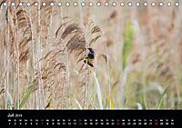 Der Zauber der Natur (Tischkalender 2019 DIN A5 quer) - Produktdetailbild 7