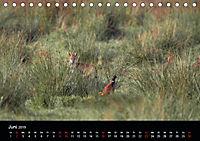 Der Zauber der Natur (Tischkalender 2019 DIN A5 quer) - Produktdetailbild 6