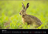Der Zauber der Natur (Wandkalender 2019 DIN A2 quer) - Produktdetailbild 4