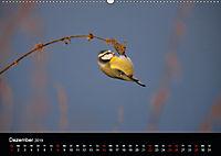 Der Zauber der Natur (Wandkalender 2019 DIN A2 quer) - Produktdetailbild 12