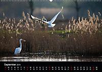 Der Zauber der Natur (Wandkalender 2019 DIN A2 quer) - Produktdetailbild 9