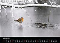 Der Zauber der Natur (Wandkalender 2019 DIN A4 quer) - Produktdetailbild 1