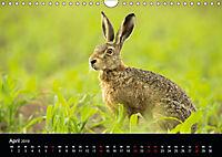 Der Zauber der Natur (Wandkalender 2019 DIN A4 quer) - Produktdetailbild 4