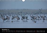 Der Zauber der Natur (Wandkalender 2019 DIN A4 quer) - Produktdetailbild 11