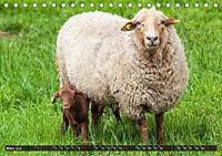 Dettelbach am Main (Tischkalender 2019 DIN A5 quer) - Produktdetailbild 3