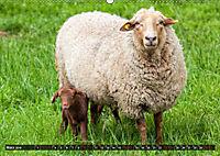 Dettelbach am Main (Wandkalender 2019 DIN A2 quer) - Produktdetailbild 3