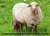 Dettelbach am Main (Wandkalender 2019 DIN A3 quer) - Produktdetailbild 3