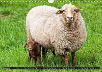 Dettelbach am Main (Wandkalender 2019 DIN A4 quer) - Produktdetailbild 3