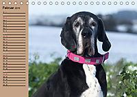 Deutsche Doggen - Sanfte Riesen (Tischkalender 2019 DIN A5 quer) - Produktdetailbild 2