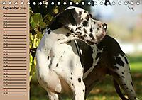 Deutsche Doggen - Sanfte Riesen (Tischkalender 2019 DIN A5 quer) - Produktdetailbild 9