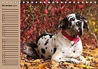 Deutsche Doggen - Sanfte Riesen (Tischkalender 2019 DIN A5 quer) - Produktdetailbild 11