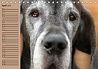 Deutsche Doggen - Sanfte Riesen (Tischkalender 2019 DIN A5 quer) - Produktdetailbild 4