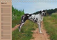 Deutsche Doggen - Sanfte Riesen (Tischkalender 2019 DIN A5 quer) - Produktdetailbild 3