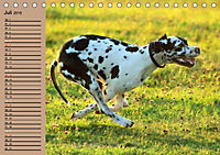 Deutsche Doggen - Sanfte Riesen (Tischkalender 2019 DIN A5 quer) - Produktdetailbild 7
