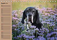 Deutsche Doggen - Sanfte Riesen (Tischkalender 2019 DIN A5 quer) - Produktdetailbild 8
