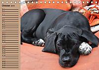 Deutsche Doggen - Sanfte Riesen (Tischkalender 2019 DIN A5 quer) - Produktdetailbild 10