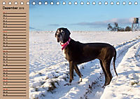Deutsche Doggen - Sanfte Riesen (Tischkalender 2019 DIN A5 quer) - Produktdetailbild 12