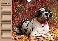 Deutsche Doggen - Sanfte Riesen (Wandkalender 2019 DIN A4 quer) - Produktdetailbild 11