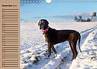 Deutsche Doggen - Sanfte Riesen (Wandkalender 2019 DIN A4 quer) - Produktdetailbild 12