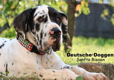 Deutsche Doggen - Sanfte Riesen (Wandkalender 2019 DIN A2 quer), Marion Reiß - Seibert