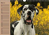 Deutsche Doggen - Sanfte Riesen (Wandkalender 2019 DIN A4 quer) - Produktdetailbild 5