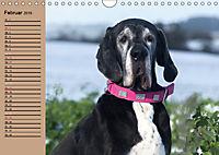 Deutsche Doggen - Sanfte Riesen (Wandkalender 2019 DIN A4 quer) - Produktdetailbild 2