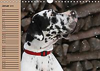 Deutsche Doggen - Sanfte Riesen (Wandkalender 2019 DIN A4 quer) - Produktdetailbild 1