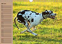 Deutsche Doggen - Sanfte Riesen (Wandkalender 2019 DIN A4 quer) - Produktdetailbild 7
