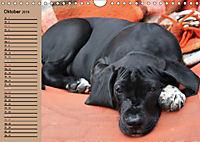 Deutsche Doggen - Sanfte Riesen (Wandkalender 2019 DIN A4 quer) - Produktdetailbild 10