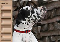 Deutsche Doggen - Sanfte Riesen (Wandkalender 2019 DIN A2 quer) - Produktdetailbild 1