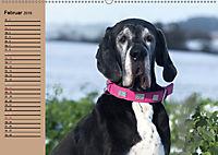 Deutsche Doggen - Sanfte Riesen (Wandkalender 2019 DIN A2 quer) - Produktdetailbild 2
