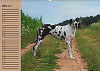Deutsche Doggen - Sanfte Riesen (Wandkalender 2019 DIN A2 quer) - Produktdetailbild 3