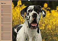 Deutsche Doggen - Sanfte Riesen (Wandkalender 2019 DIN A2 quer) - Produktdetailbild 5