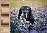 Deutsche Doggen - Sanfte Riesen (Wandkalender 2019 DIN A2 quer) - Produktdetailbild 8