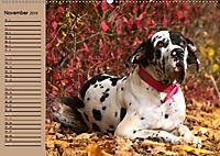 Deutsche Doggen - Sanfte Riesen (Wandkalender 2019 DIN A2 quer) - Produktdetailbild 11
