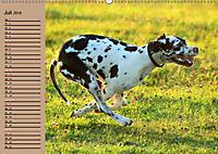 Deutsche Doggen - Sanfte Riesen (Wandkalender 2019 DIN A2 quer) - Produktdetailbild 7