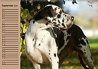 Deutsche Doggen - Sanfte Riesen (Wandkalender 2019 DIN A2 quer) - Produktdetailbild 9
