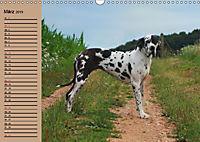 Deutsche Doggen - Sanfte Riesen (Wandkalender 2019 DIN A3 quer) - Produktdetailbild 3