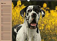 Deutsche Doggen - Sanfte Riesen (Wandkalender 2019 DIN A3 quer) - Produktdetailbild 5