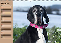 Deutsche Doggen - Sanfte Riesen (Wandkalender 2019 DIN A3 quer) - Produktdetailbild 2