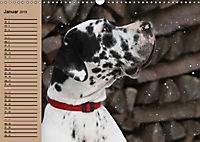 Deutsche Doggen - Sanfte Riesen (Wandkalender 2019 DIN A3 quer) - Produktdetailbild 1