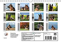 Deutsche Schäferhunde - Liebenswerte Graunasen (Wandkalender 2019 DIN A4 quer) - Produktdetailbild 2