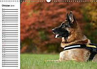 Deutsche Schäferhunde - Liebenswerte Graunasen (Wandkalender 2019 DIN A3 quer) - Produktdetailbild 10
