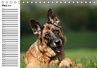 Deutsche Schäferhunde - Liebenswerte Graunasen (Tischkalender 2019 DIN A5 quer) - Produktdetailbild 3