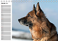 Deutsche Schäferhunde - Liebenswerte Graunasen (Tischkalender 2019 DIN A5 quer) - Produktdetailbild 1