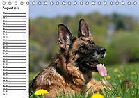 Deutsche Schäferhunde - Liebenswerte Graunasen (Tischkalender 2019 DIN A5 quer) - Produktdetailbild 8