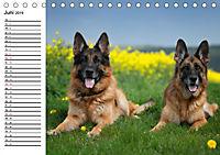 Deutsche Schäferhunde - Liebenswerte Graunasen (Tischkalender 2019 DIN A5 quer) - Produktdetailbild 6