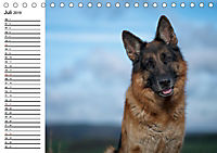 Deutsche Schäferhunde - Liebenswerte Graunasen (Tischkalender 2019 DIN A5 quer) - Produktdetailbild 7