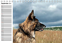 Deutsche Schäferhunde - Liebenswerte Graunasen (Tischkalender 2019 DIN A5 quer) - Produktdetailbild 9
